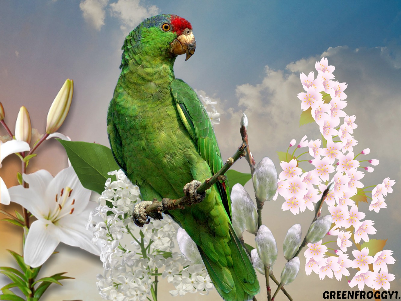 Parot Wallpapers Green Parrot Wallpaper And Background Image 1333x1000 Id