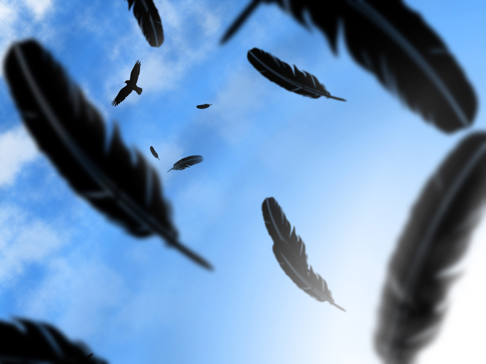 Falling Feathers Wallpaper Crow Computer Wallpapers Desktop Backgrounds 1600x1200