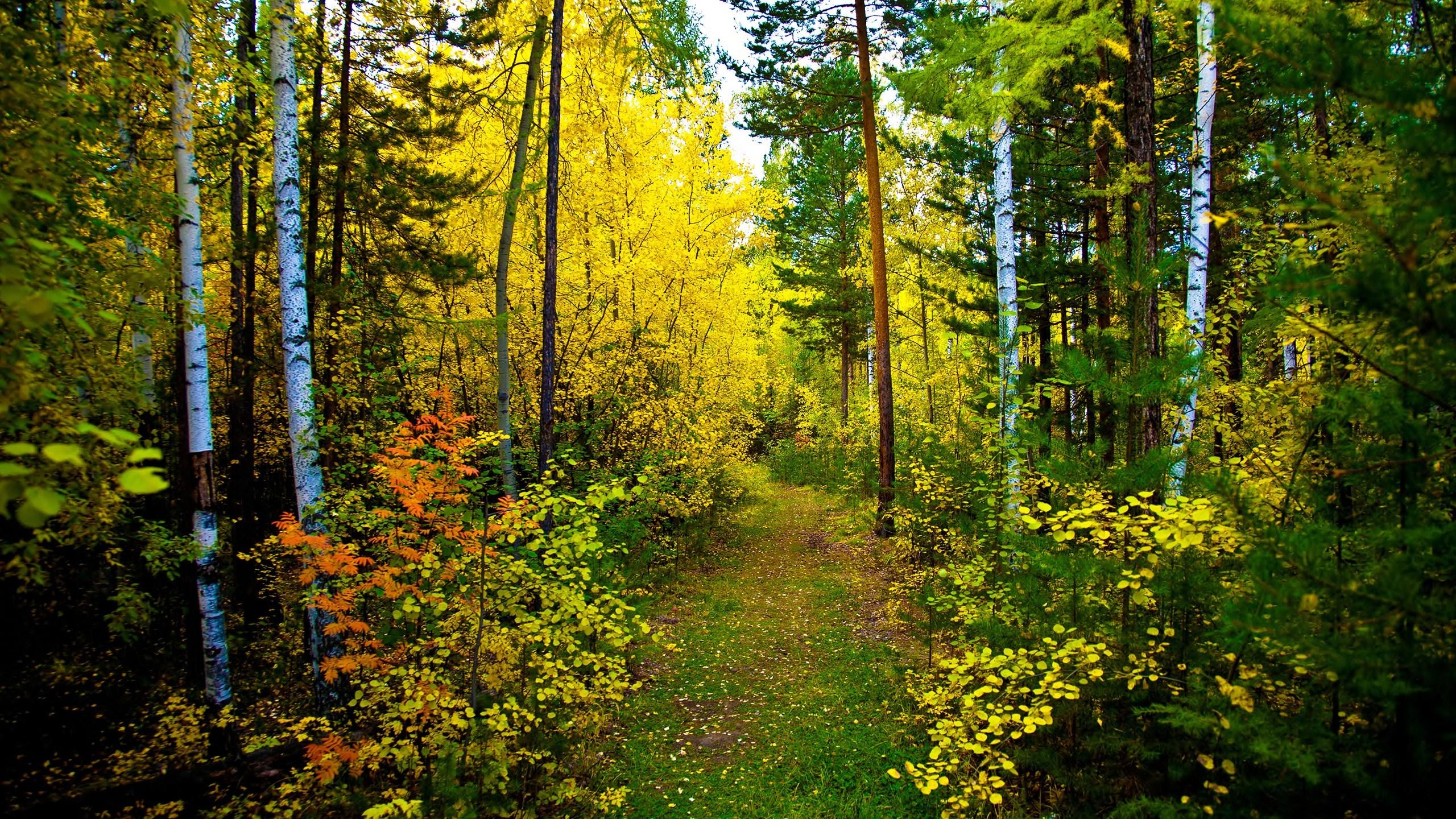 Fall Smoky Mountains Wallpaper Forest Papel De Parede Hd Plano De Fundo 2560x1440