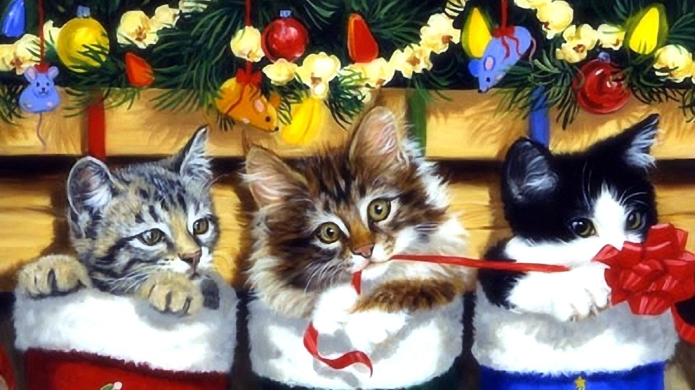 Cute Cats And Kittens Wallpaper Hd Cat Themes Kitten Stocking Wallpaper And Background Image 1366x768