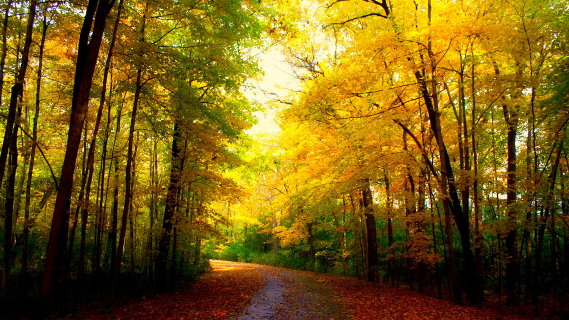 Fall Leaves Pathway Computer Wallpaper Autumn Colors Full Hd Wallpaper And Background Image