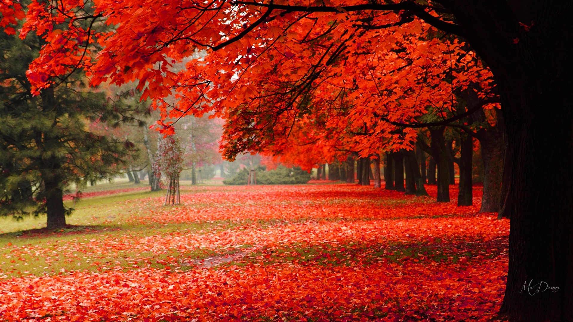 Fall Foliage Wallpaper Widescreen Tree In Autumn Park Hd Wallpaper Background Image