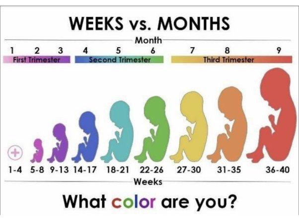 e3injnfov6lgoajulmiqpfranzxulmwj_lgjpg people always ask how months