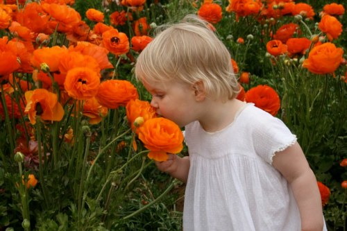 "My niece Hanna taking time to smell the ""Roses"""