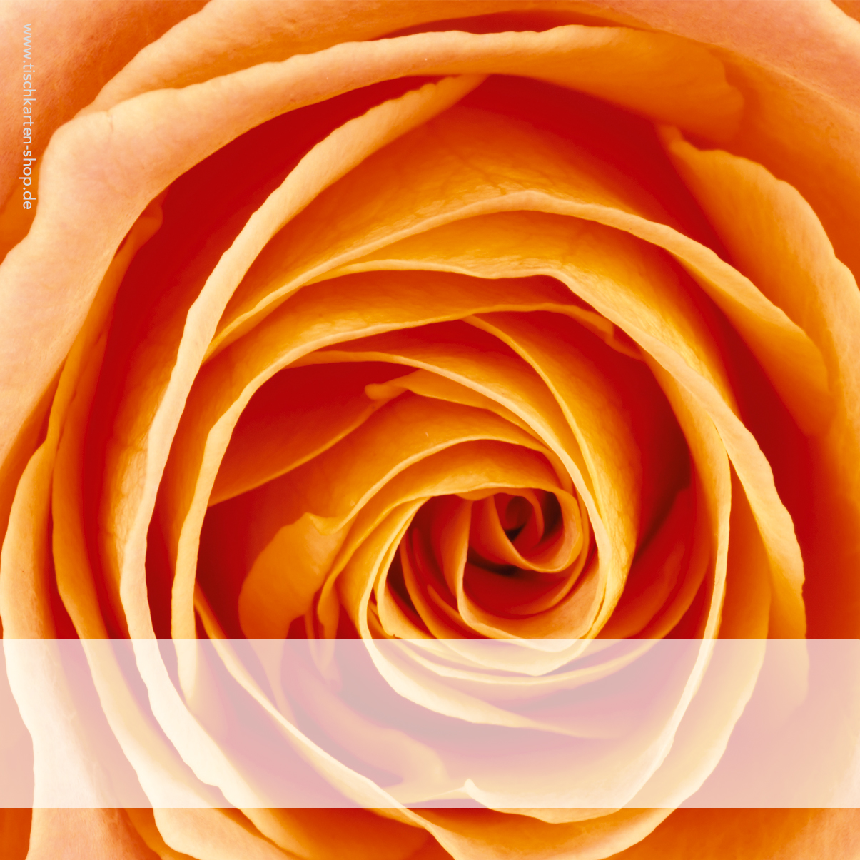 Tischkarte Tg 94 Rose Orange Tischkarten Shop