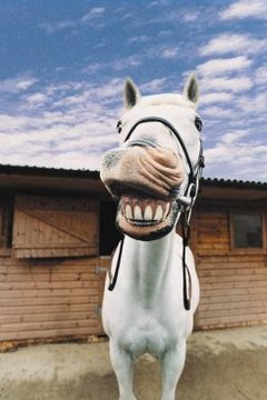 Exotic Animal Wallpaper Signs A Horse Needs His Teeth Floated Animals Mom Me