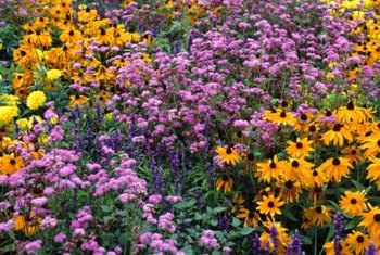 How To Arrange A Perennial Flower Bed Home Guides Sf Gate