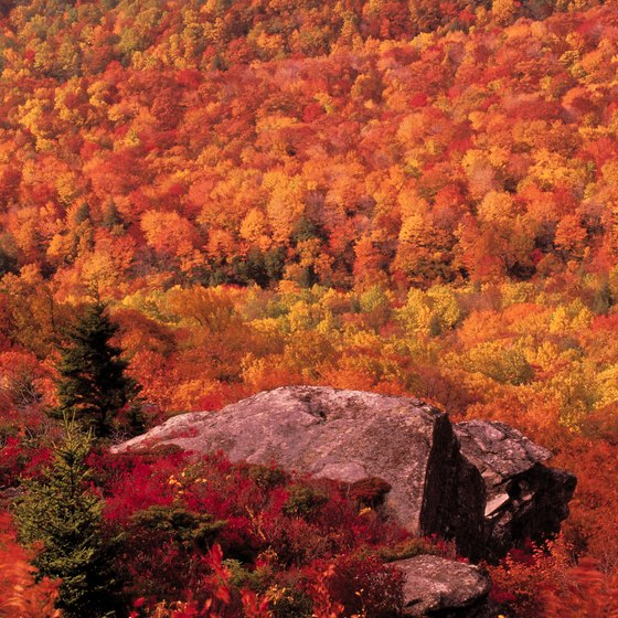 Fall Leaves Dancing Wallpaper Nightclubs In Boone N C Usa Today