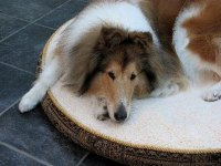 Why Do Dogs Scratch at Their Bed? - Pets