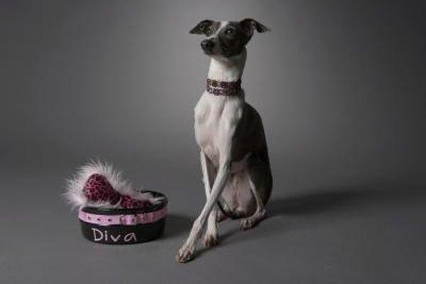 italian greyhound skin conditions