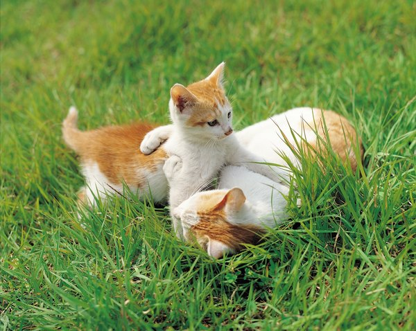 Age, Maturity  Growth in Cats - Pets