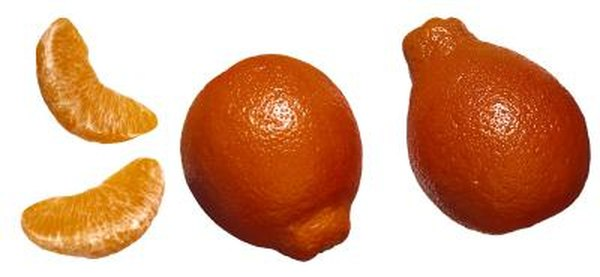 When Do Honeybell Oranges Get Ripe? Home Guides SF Gate