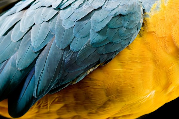 Feather Disorders In Parrots Pets