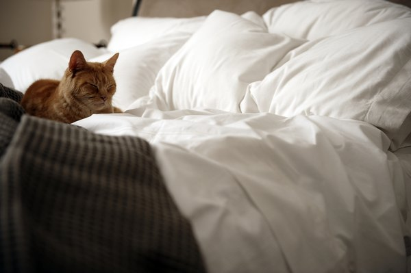 Fall Cat Wallpaper Why Do Cats Like To Sleep On Top Of You Pets