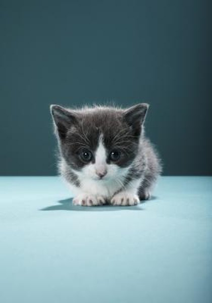 How Long Does It Take For The First Litter Of Kittens To