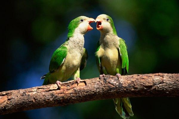 Chances Quotes Wallpaper Getting A Quaker Parrot To Talk Pets