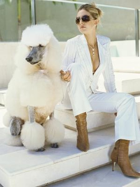 Glam Fall Background Wallpaper Poodle Coat Clipping Styles Pets