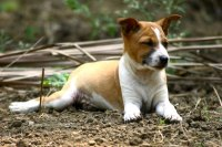 Why Do Dogs Scratch The Carpet Before Lying Down | Review ...