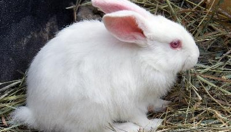 What Causes Milky Urine in Rabbits? Animals - momme