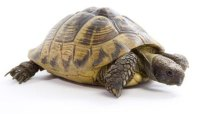The Best Heat Lights for Tortoises | Animals - mom.me