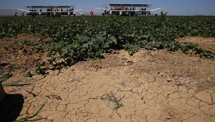The Effects Of Drought On Farmers Career Trend