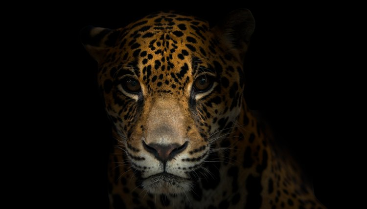 Cute Baby And Mother Wallpaper Baby Jaguar Information Animals Mom Me