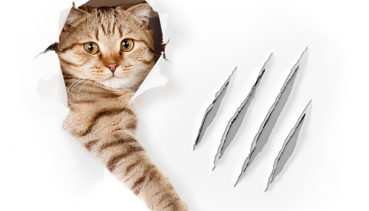 Cat Torn Out Claw Treatment Animals Momme