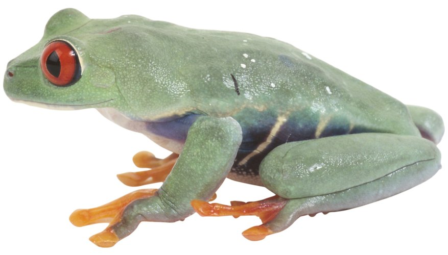 How to Make a Clay Tree Frog Our Pastimes - frog body