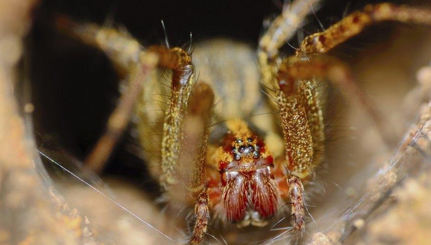 Types of Spiders in Michigan\u0027s Upper Peninsula Sciencing