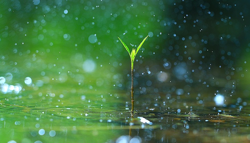 Falling Leaves In Water Live Wallpaper The Rain S Importance To Life On Earth Sciencing