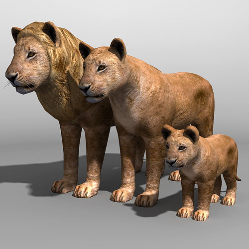 Bison Poly Max 3d Asset Lion Family 19838 | Cgtrader