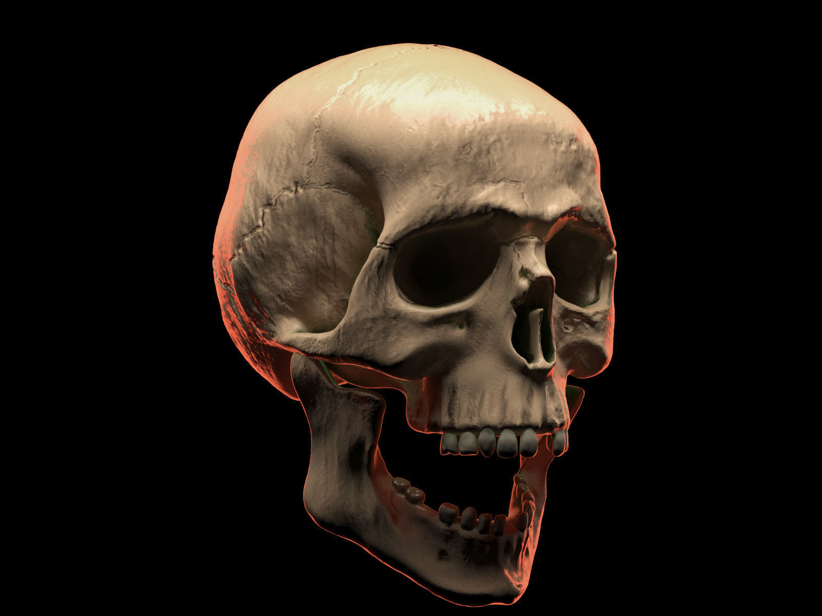 Human Skull List Of Synonyms And Antonyms Of The Word Human Skull