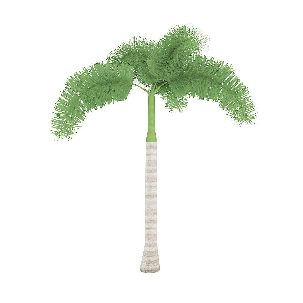 Fullsize Of Foxtail Palm Tree