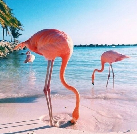 Flamingo Iphone Wallpaper Flaming Na Flamingi Zszywka Pl