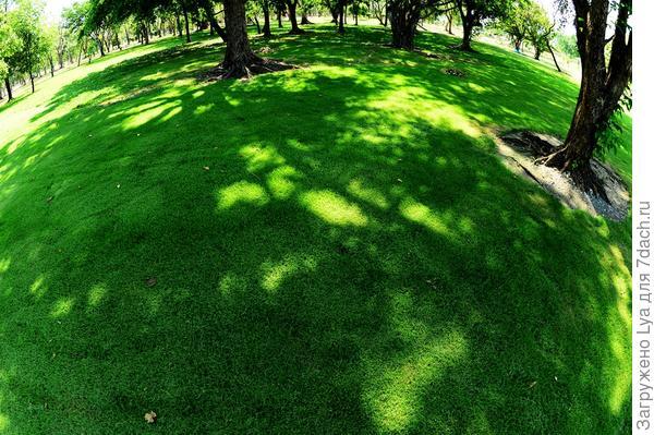 Газон под деревьями