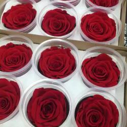 Beauty and the Beast Rose Forever Beautiful Arrangements Home Buy