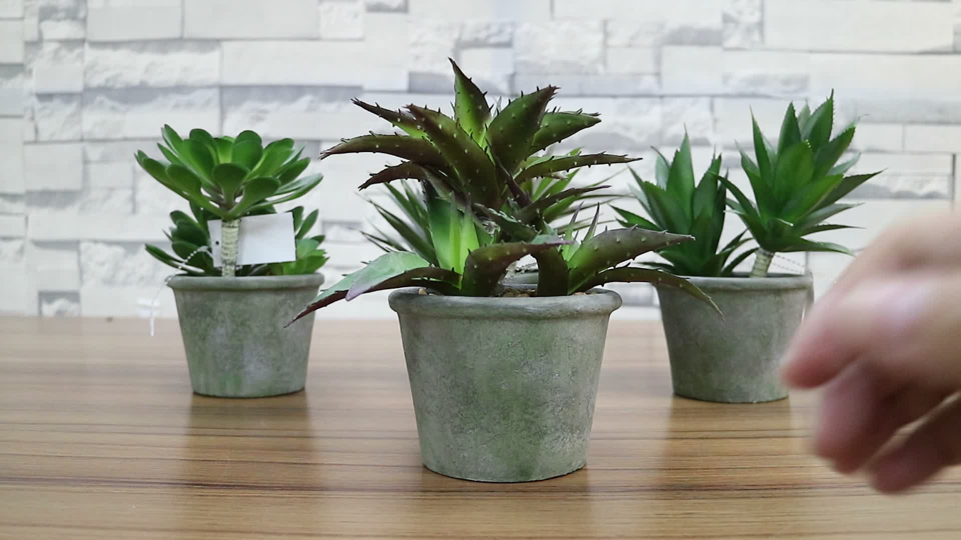Small Succulent Plants For Sale Factory Direct Sale Fake Mini Aloe Succulent Plant Potted