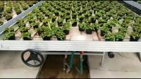 Ebb And Flow Tables Rolling Bench Growing Systems - Buy ...