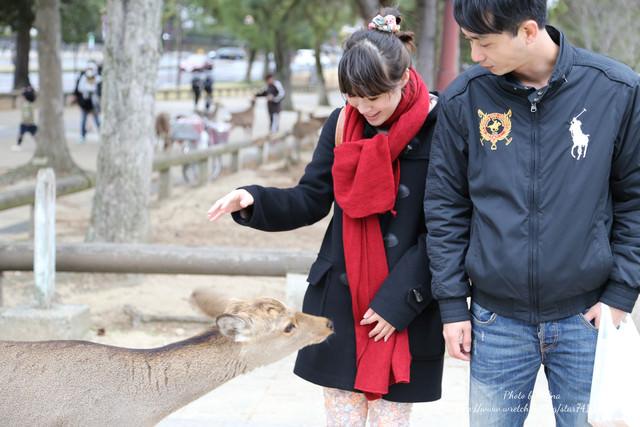 【2013日本大阪】我愛奈良♥♥與鹿最親密的接觸