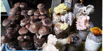 【台中景點】 新社阿亮香菇園 ● 來採菇菇囉 ❤❤