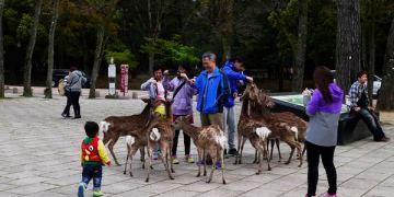 【奈良景點】奈良市 東大寺 世界文化遺產 ● 一起來去給鹿追!❤❤