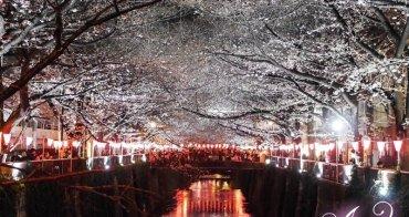 【2017❤東京】東京8天7夜賞櫻之旅。絕美粉櫻小徑~目黑川夜櫻 x 蔦屋書店