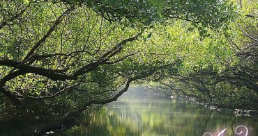 【台南旅遊】綠色隧道。此生必去!絕美私密景點~台版亞馬遜河