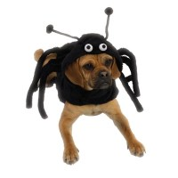 Halloween Dog Costume Black Spider Spidey Paws LEGS NEW | eBay