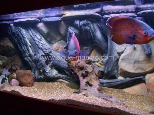 AQUARIUM FISH TANK BACKGROUNDS 3D AMAZON HIGH QUALITY MANY SIZES HAND