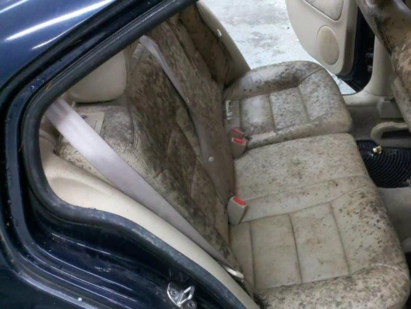 Car Carpet Car Carpet Mildew Smell