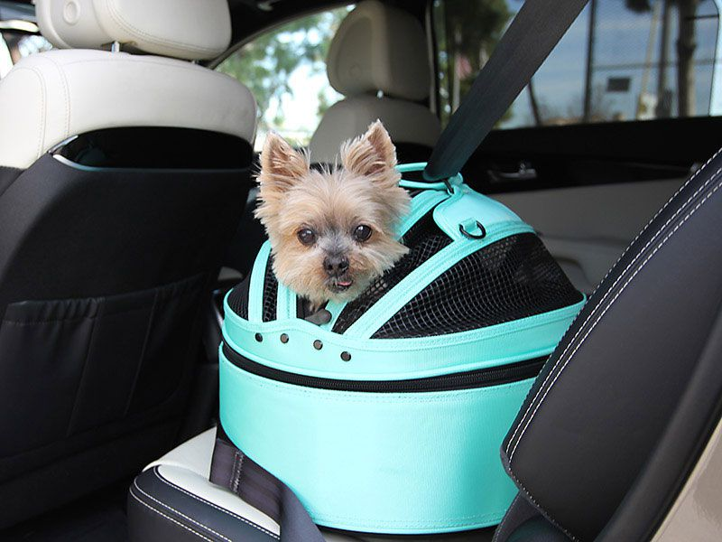 The 10 Best Cars For Dogs Autobytelcom