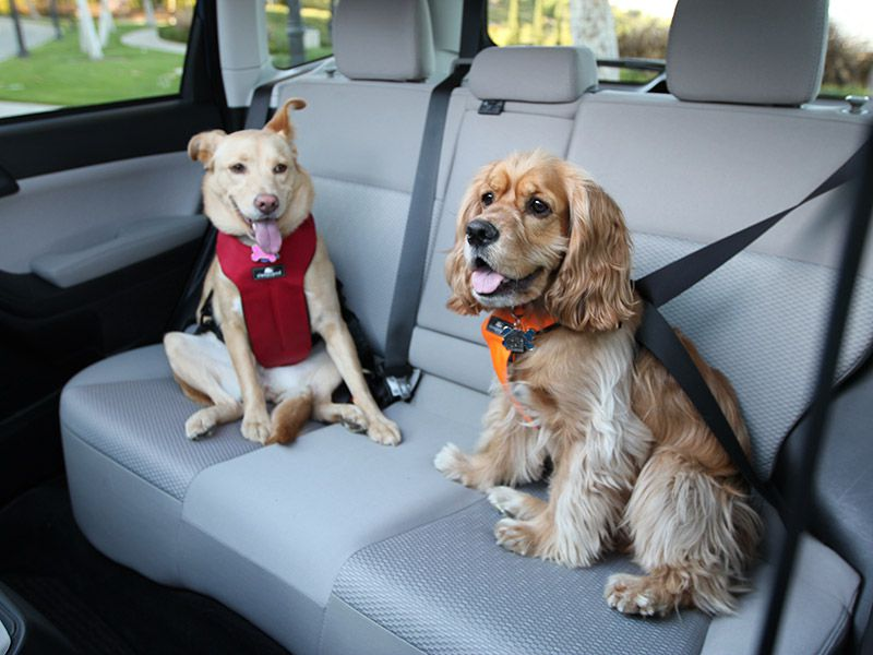 Child Safety Seat Brands Top Performing Dog Seat Belts Crates And Carriers