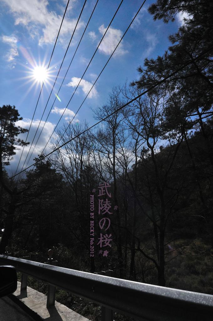 【台中】不用去日本看櫻花了….武陵農場の粉紅櫻花