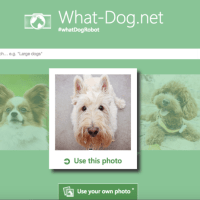 There's Something Fishy About Microsoft's New Dog App